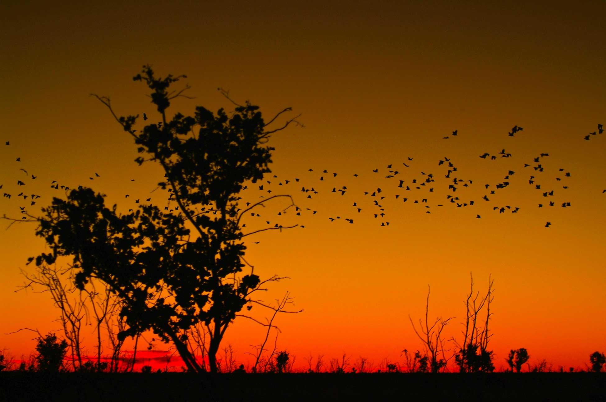 Outback am Abend, Australien