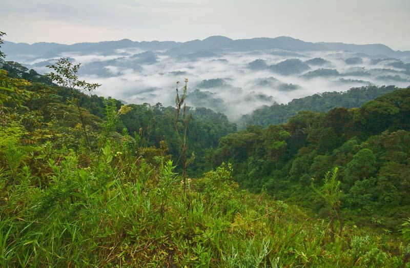Impressionen am Morgen, Nyungwe NP, Ruanda