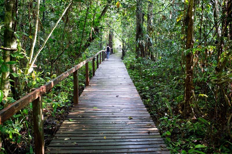 Boardwalk im Mulu Nationalpark