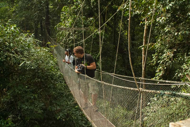 Hängebrücke Canopy Walk im Mulu Nationalpark