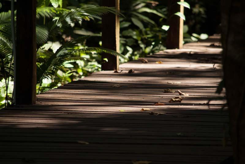 Boardwalk Mulu Nationalpark