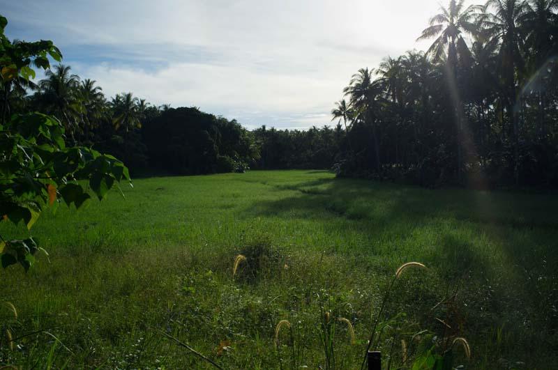 Reisfelder umgeben das Dschungelcamp