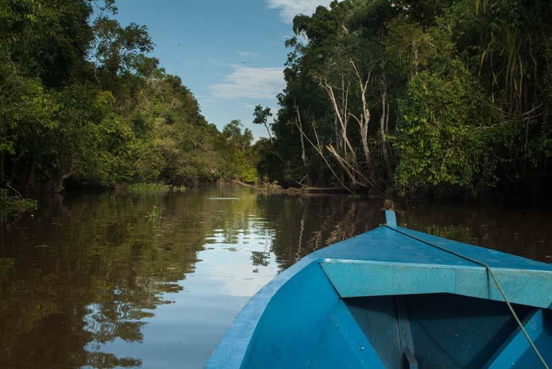 Sukau Bootsfahrt Kinabatangan River
