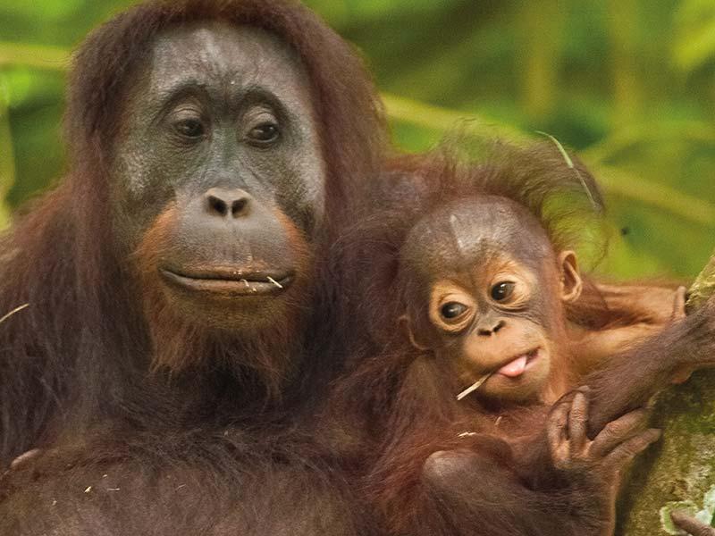 Unsere bemerkenswertesten Tierbegegnungen