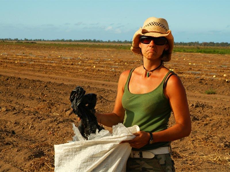 Anne bei der Feldarbeit, Gumlu, Queensland