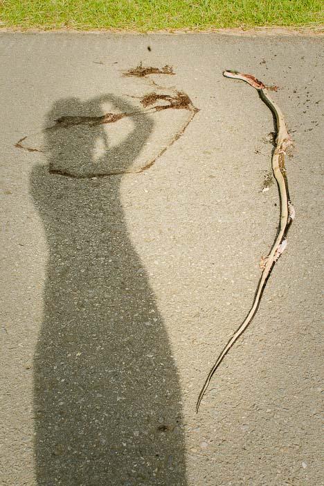 Anne fotografiert die tote Schlange, Mulu Nationalpark, Borneo, Malaysia