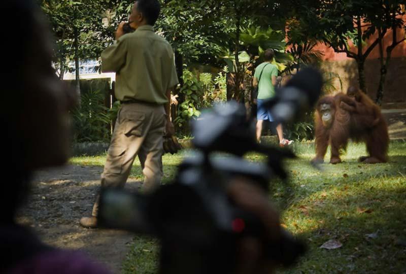 Anne mit Kamera, Semenggoh Wildlife Centre, Malaysia