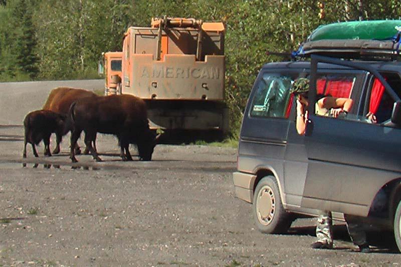 Anne umzingelt und bekommt Angst, Yukon, Kanada