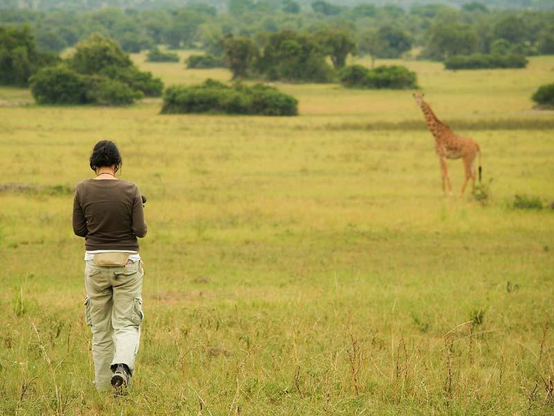 Anne geht auf eine Giraffe zu.