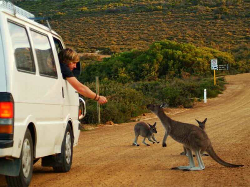 Bunki und die Kängurus