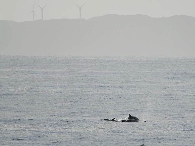 Delphine und Windräder