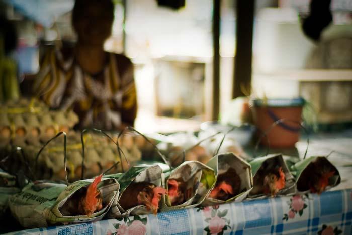 Huehner im Angebot, Markt nahe Kuching, Sarawak, Borneo