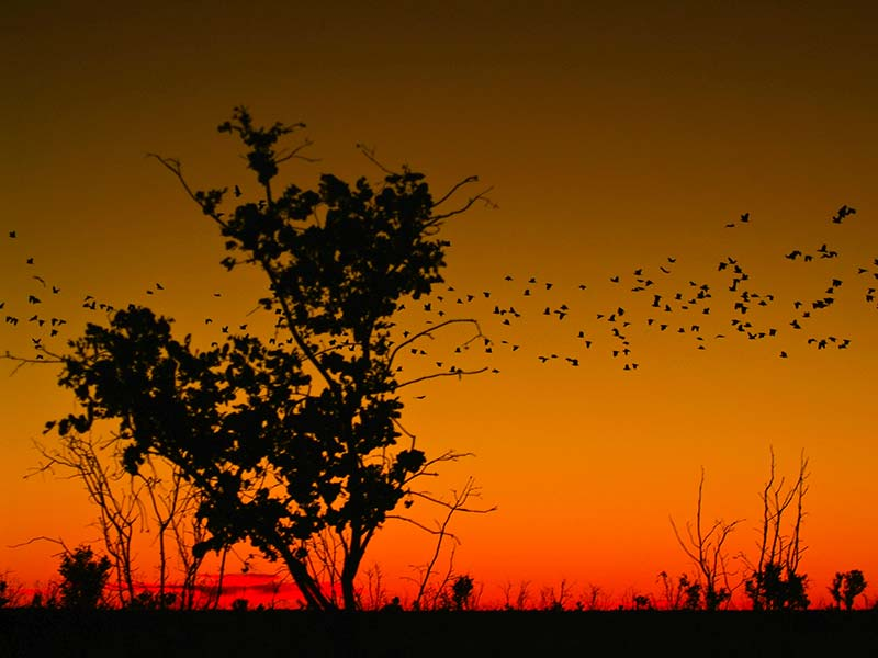 Ein Schwarm von Kakadus