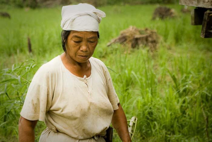 Lanan kommt vom Reisfeld, Mulu Nationalpark, Borneo, Malaysia