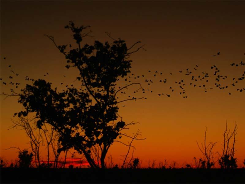 Sonnenuntergang im Nullarbor