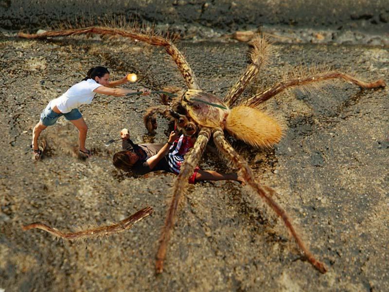 wir kaempfen gegen Spinne