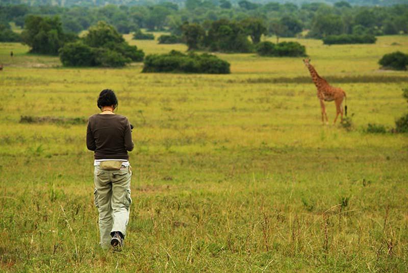 Anne filmt eine Giraffe, Akagera Park, Ruanda