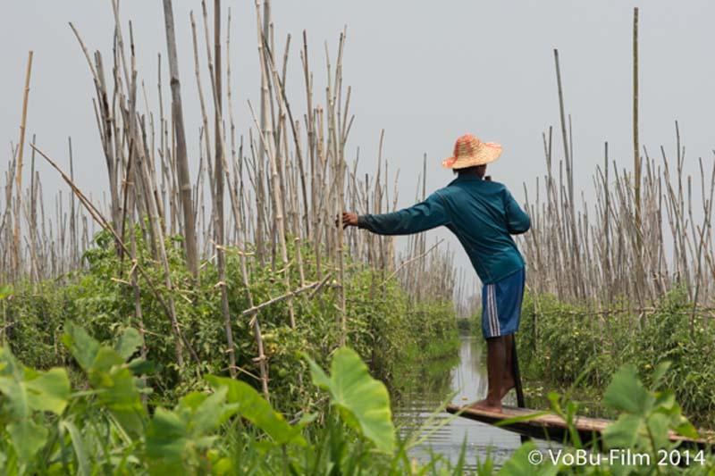 Bauer vor schwimmendem Garten, Inle Lake, Myanmar